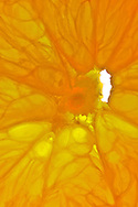 © 2008 Randy Vanderveen, all rights reserved.Grande Prairie, Alberta.Oranges are a good source of vitamin C.