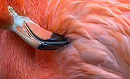Flamingos Close Up