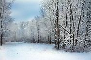 Seth Snap Snow