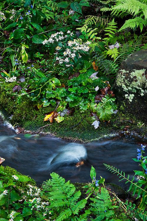 Gently meandering stream .