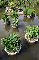Iris Pond at Dazaifu Tenmangu Shrine -Dazaifu Tenmangu Shrine was built in memory of Michizane Sugawara and the the God of literature or calligraphy.  Sugawara endured a life of hardship in exile at Dazaifu, yet continued his studies.