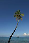 Coconut palm tree & yacht<br />