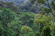 Ansicht im Bergregenwald, Bwindi Forest, Uganda<br /> <br /> View in the montane rainforest, Bwindi Forest, Uganda