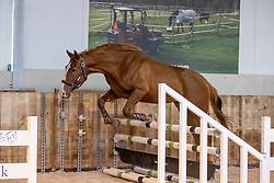 Tarinde van de Hertog, Benaets Kristof<br /> The Special Free Jump Contest - Lubbeek 2021<br /> © Hippo Foto - Dirk Caremans16/10/2021
