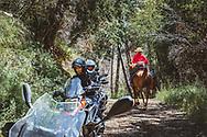 Arabian horses and BMW horses.