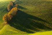 Trees cast shadows onto a pasture, afternoon light, October, Dolomite Mountains, South Tyrol, Italy