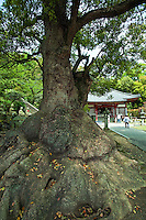 Motoyana-ji temple, was built in the year 807.  The Kamakura period temple was destroyed and rebuilt.  The main hall survived and is now a National Treasure and a National Important Cultural Property, Shikoku pilgrimage temple number 70