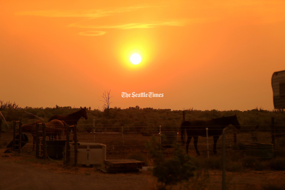 Horses glow under the smoky afternoon sun created by recent wildfires in Omak, Washington Thursday August 20, 2015.<br /> <br /> Bettina Hansen / The Seattle Times