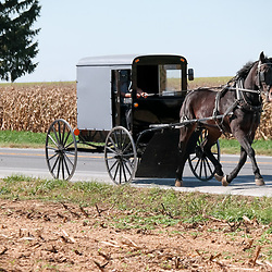Gordonville, PA - October 6, 2014: Amish buggy on a rural Lancaster County road.