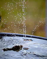 Fountain in a Frozen Bird Bath. Image taken with a Fuji X-T3 camera and 200 mm f/2 lens with 1.4x teleconverter (ISO 320, 280 mm, f/4, 1/500 sec).
