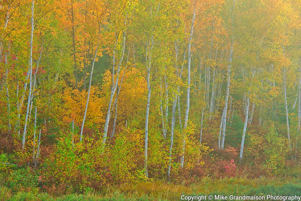 Deciduous trees in autumn. Lake Laurentian Conservation Area.<br />Sudbury<br />Ontario<br />Canada