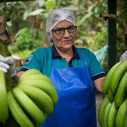 Banana production, Ecuador