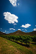 Vineyards in Hunter Valley, New South Wales, Australia