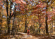 Fall foliage turns red, orange, and yellow from a variety of deciduous trees in Hanging Rock State Park, Stokes County, North Carolina, USA.