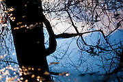 Bare tree reflected:Winter in Vondelpark, Amsterdam