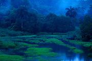 Lluvias de oriente / Parque Nacional Camino de Cruces, Panamá.<br /> <br /> Edición de 10   Víctor Santamaría.<br /> <br /> <br /> Oriental rains / Camino de Cruces National Park, Panama.<br /> <br /> Edition of 10   Víctor Santamaría.