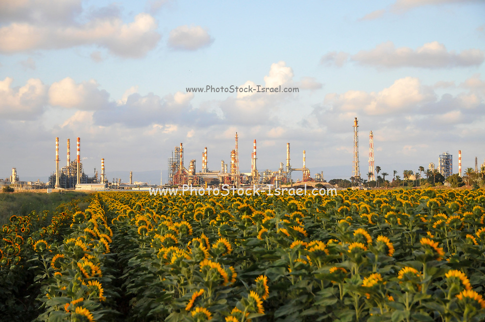 Farming and farmland in front of Ithe flues and chimneys of the Petrochemical factory Photographed in srael, Haifa bay