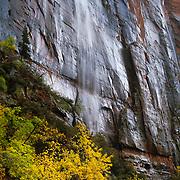 Rare rainstorm in Zion Canyon, Zion National Park, Utah.