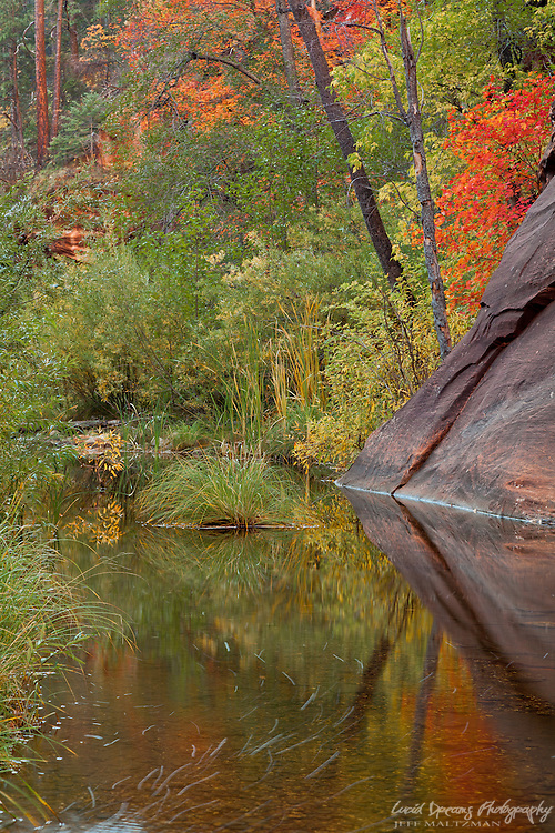 The West Fork of Oak Creek Canyon comes vividly alive with autumn color.