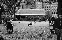 Dogs in Park,  in Manhattan, New York, - Hundar í Manhattan í New York