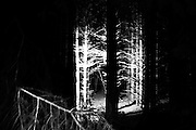 Summer 2015. Sugny, Belgium. Kevin from France take a picture inside the forest at night during a walk on our international work-camp experience on FEDASIL refugee center.