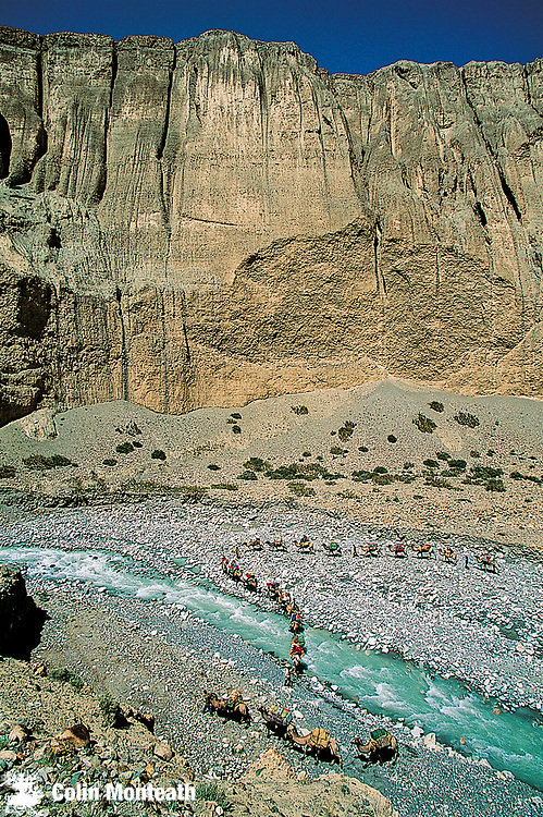 Bactrian camel caravan crosses river, Aghil range, Chongtar expedition 1994, Karakoram mtns, far western China, Central Asia.