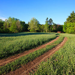 A farm road in a hay field at Windrush Farm in North Andover and Boxford, Massachusetts.