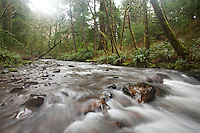 Scenic image of Short Sands Creek in Oswald West State Park