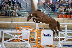 054, Nikita W<br /> KWPN Kampioenschappen 2021<br /> Ermelo <br /> © Hippo Foto - Dirk Caremans<br /> 13/08/2021