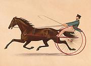 George M. Patchen Trotting Stallion 1889