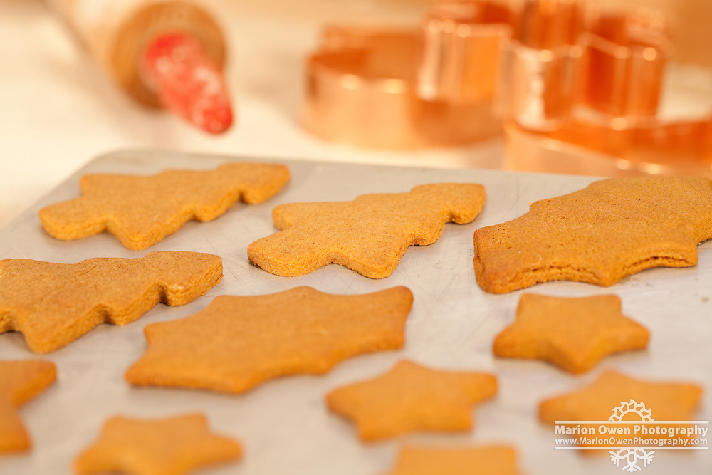 Closeup of fresh-baked gingerbread cookies cooling on a cookie sheet with red-handled rolling pin and copper cookie cutters in the background.