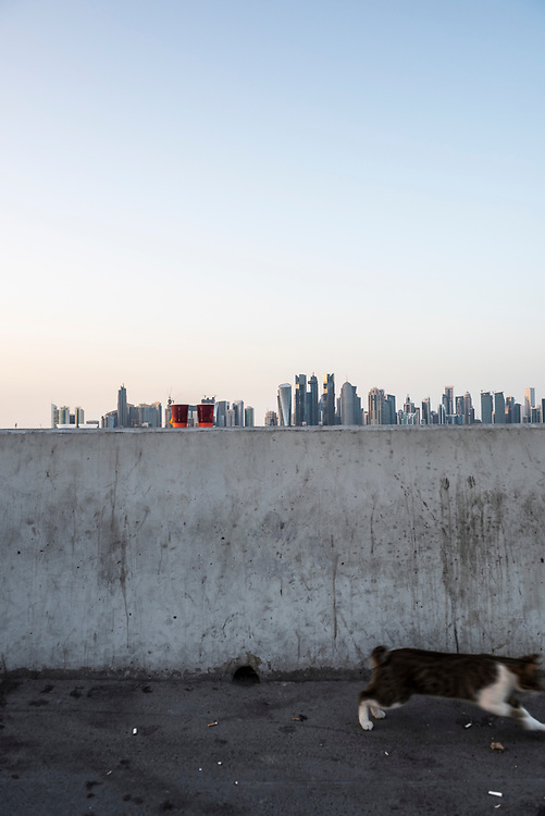 A cat runs beside a wall in Doha, Qatar. Beyond the wall, and on the other side of Doha Bay, is the skyline of Doha.