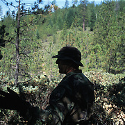 """The national forests in California and across the nation are increasingly being used to grow marijuana. The clandestine grows are shielded by tree canopies and are often close to, if not actually inside, recreational usage areas so that the growers can appear to be normal recreational users. A task force comprised of Sheriff deputies, US Forest Service Agents and Dept. of Justice agents raided a grow in the Tahoe National Forest that yielded 5000 plants in the 2""""-12"""" range and arrested one Mexican national who was tending the grow. Here, task force agents search for the marijuana plants."""
