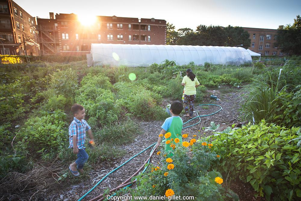"""Une centaine de familles de réfugiés du Bhoutan et de Birmanie ont transformé un terrain vacant d'Albany Park en un jardin, afin d'y produire des légumes bio issus de leur culture. Cette activité leur permet de renouer avec leurs racines agricoles, d'accéder à une nourriture de qualité, tout en créant des liens avec la communauté environnante. Une partie de leur récolte est vendue sur le marché local, le Farmer's Market d'Albany Park. // One hundred refugee families from Bhutan and Myanmar have transformed a vacant lot of Albany park into a garden, allowing them to produce organic vegetables indigenous to their countries. This activity allows them to reconnect with their agricultural roots, brings access to quality and familiar vegetables, and all the while allows them to integrate into the surrounding community. A portion of their weekly harvest is sold at the """"Farmers Market"""" in Albany park."""
