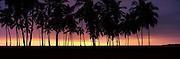 Silhouette of palm trees on the beach, Puuhonua o Honaunau National Historical Park, Big Island, Hawaii, USA
