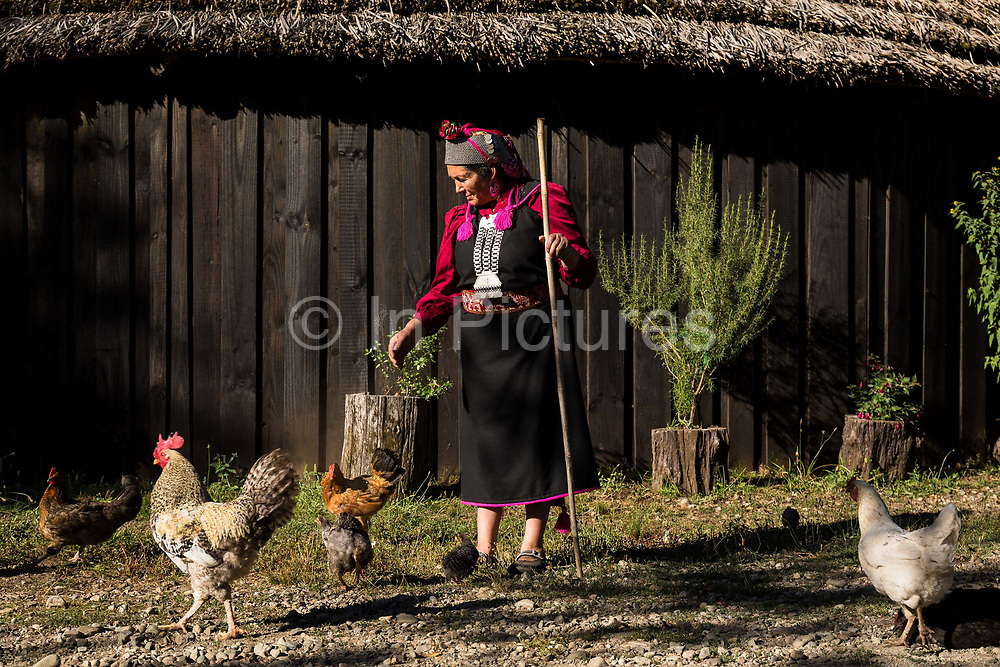 Juana Calfunao Paillalef,  a female Lonko and certainly one of the most outspoken defenders of the Mapuche cause stands in front of her Ruka, the traditional circular wood and straw hut on her ancestral land. Having being inprisoned several times and in all for more then four years, has become an important symbol for the resistence of her indigenous people. She is internationally known and admired both at home and abroad, though her many enemies inside the Chilean state consider her to be a terrorist. She and her family are constantly threatened  and intimidated by the police. They have suffered multpile physical and verbal aggressions over the years as well and continually be under surveillance. Unbowed she continues her resisitance fight.