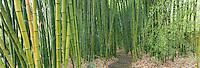 Bamboo wall. (65000 x 22166 pixels)