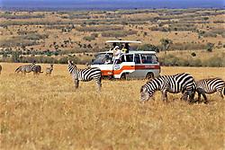 Tourists Watching Zebra