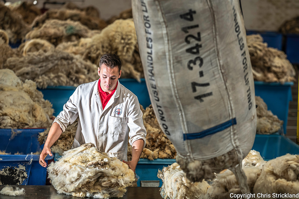 Galashiels, Scottish Borders, UK. 25th June 2019. The British Wool grading depot at Galashiels enters it's peak summer season as premium sheep fleeces come in from the Border hills. 3,000,000 kilos of wool is processed at Gala per annum, each fleece weighs 2kg, and a single grader sorts through 7,000 kilos a day.