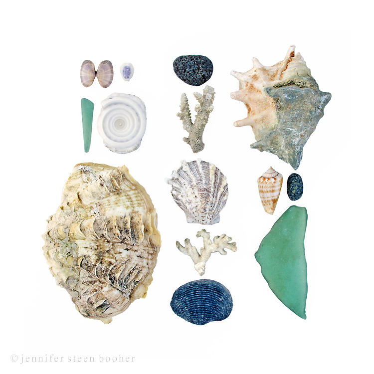 The day was hot, humid, and sporadically rainy, which did my hair no favors but made for some beautiful clouds. <br /> <br /> Fluted Giant Clam shell (Tridacna squamosa), Spider Conch (Lambis sp.), Top Shell (Trochus sp.), sea glass, pumice, and several species I couldn't identify, including a cowrie, coral branches, scallop, and Cone Snail.