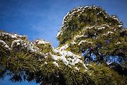 JAPAN, NARITA - 13 JANUARY 2013 –  Snow in the countryside of Narita [FR] Neige dans les campagne de Narita