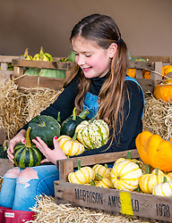 Kilduff Farm, East Lothian, Scotland, United Kingdom, 17 October 2019. Pumpkin Patch: The pick your own pumpkin patch gears up for its opening tomorrow. In its second year, Lucy and Russell Calder and their children make final preparations for visitors. The patch is open this weekend and next, selling a variety of Halloween carving pumpkins and culinary pumpkins.  A hay bale maze is an added attraction. Pictured: Maisie Calder (10 years) with some culinary pumpkins.<br /> Sally Anderson | EdinburghElitemedia.co.uk