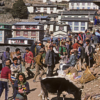 A cow tries to graze at the weekly Saturday market in Namche Bazaar, the leading Sherpa town of Nepal's Himalaya. Most people pictured have carried big loads for several days up from the lowlands (probably also the source of the cow.)