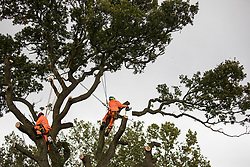 Tree surgeons working with the National Eviction Team on behalf of HS2 Ltd fell a 200-year-old oak tree alongside the East West Rail route known locally as the '7 Sisters Oak' as part of works connected to the HS2 high-speed rail link on 23 September 2020 in Steeple Claydon, United Kingdom. A small group of local people and anti-HS2 activists based at the nearby Poors Piece Conservation Project watched the felling of the tree, which was home to bats and other species, whilst monitored by a joint force of around fifty bailiffs, security guards and police officers from Thames Valley Police.