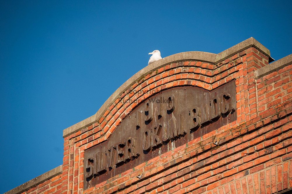 2017 DECEMBER 05 - A seagull on the Silver Okum. building at Pike Place Market, Seattle, WA, USA. By Richard Walker