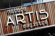 Hare Koninklijke Hoogheid Prinses Margriet heeft in Amsterdam 'Artis in Bloei' ter gelegenheid van het 175-jarig bestaan van Artis gepend.  <br /> <br /> Her Royal Highness Princess Margriet opend in Amsterdam Artis in Bloom 'on the occasion of the 175th anniversary of Artis Zoo Amsterdam.<br /> <br /> Op de foto / On the photo: Natura Artis Magistra Prinses Margriet doopt een speciale jubileumtulp met de naam Tulipa Natura Artis Magistra. ///// Princess Margriet baptizes a special anniversary tulip Tulipa called Natura Artis Magistra.