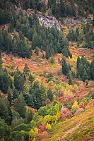 The hills surrounding Snowbain in Northern Utah explode in the vibrant red, yellow, orange and green colors of Fall.