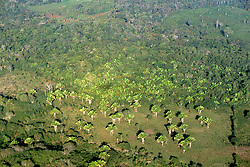 Peten Fields From Air