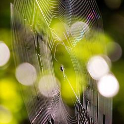 """""""Teia (teia de aranha) fotografado em Linhares, Espírito Santo -  Sudeste do Brasil. Bioma Mata Atlântica. Registro feito em 2013.<br /> <br /> <br /> <br /> ENGLISH: Spider web photographed in Linhares, Espírito Santo - Southeast of Brazil. Atlantic Forest Biome. Picture made in 2013."""""""