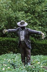 Bronze scarecrow amongst the potatoes in the kitchen garden at Raymond Blanc's Le Manoir aux Quatre Saisons
